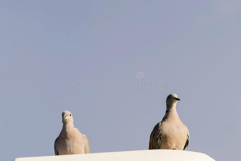 5,413 Two Pigeons Photos - Free & Royalty-Free Stock ...