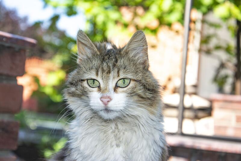 Photo portrait of a very beautiful cat stock image