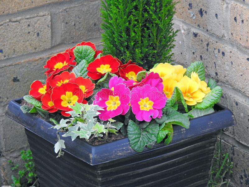 Potted flowers in small garden stock image image of plants plant download potted flowers in small garden stock image image of plants plant 112144185 mightylinksfo
