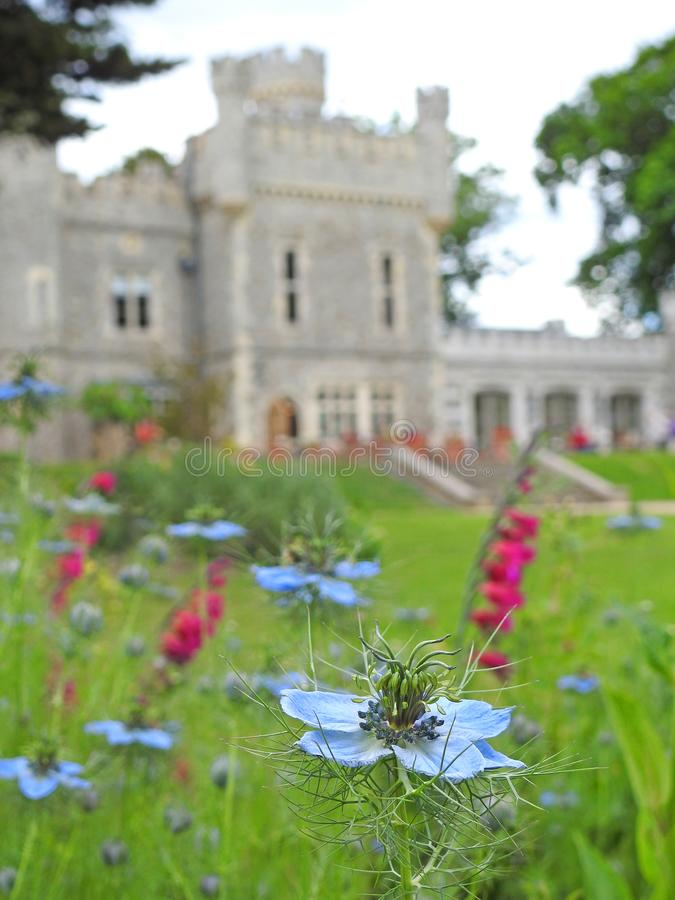 English country meadow garden flowers summer spring victorian plants. Photo of pretty english country meadow flowers and plants with tankerton castle manor house stock image