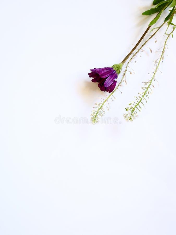 Photo of Purple Flower stock photography