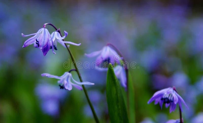 Photo of Purple Petaled Flower stock photo