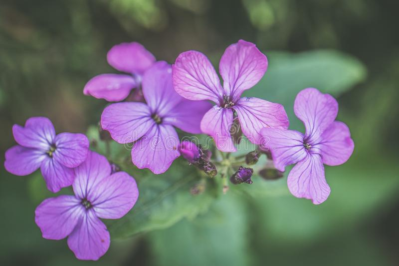 Photo of Purple Petaled Flowers royalty free stock photo
