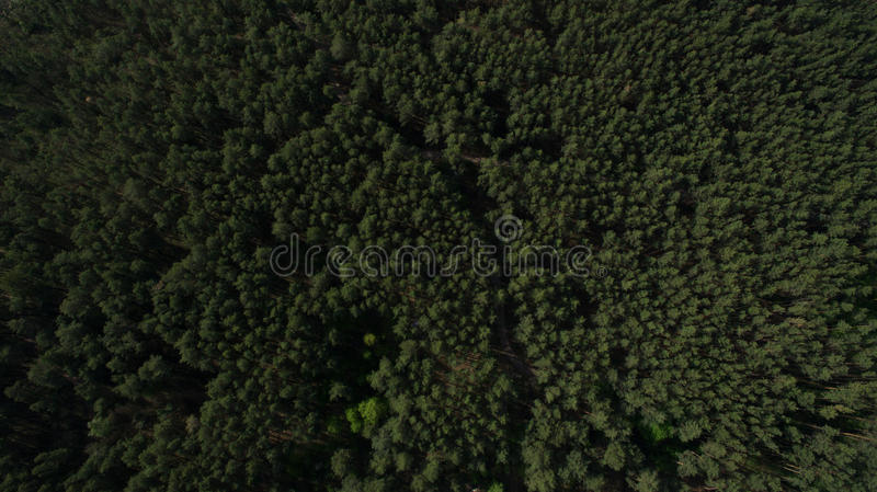 Photo from the quadrocopter of coniferous forest in summer. Beautiful aerial photography of nature in summer stock photo