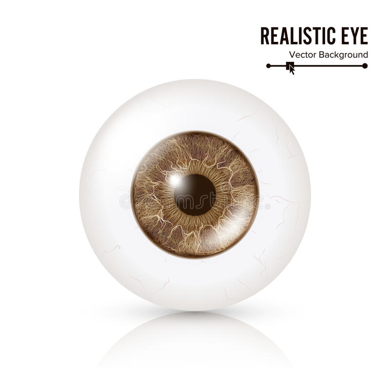 Photo Realistic Eyeball. Human Retina. Vector Illustration Of 3d Human Glossy Eye With Shadow And Reflection. Front View royalty free illustration