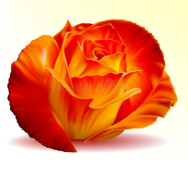 Photo-realistic fiery rose. Vector photo-realistic beautiful fiery rose on a white background stock illustration