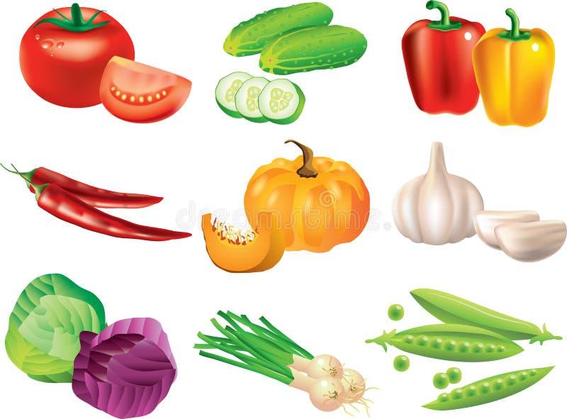 Photo-realistic reeks van groenten vector illustratie