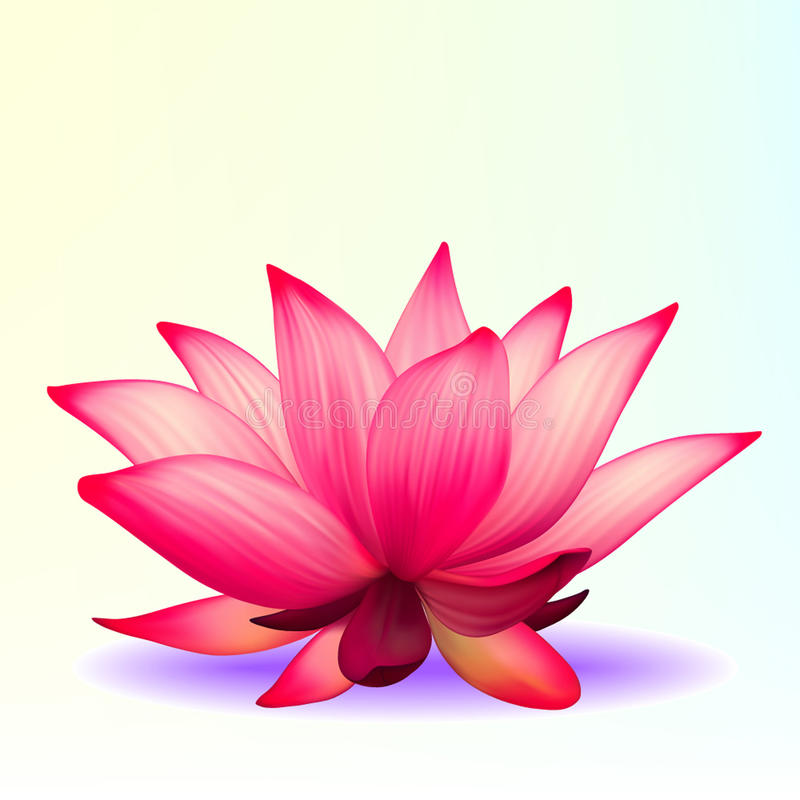 Photo-realistic lotus flower. Vector photo-realistic lotus flower royalty free illustration