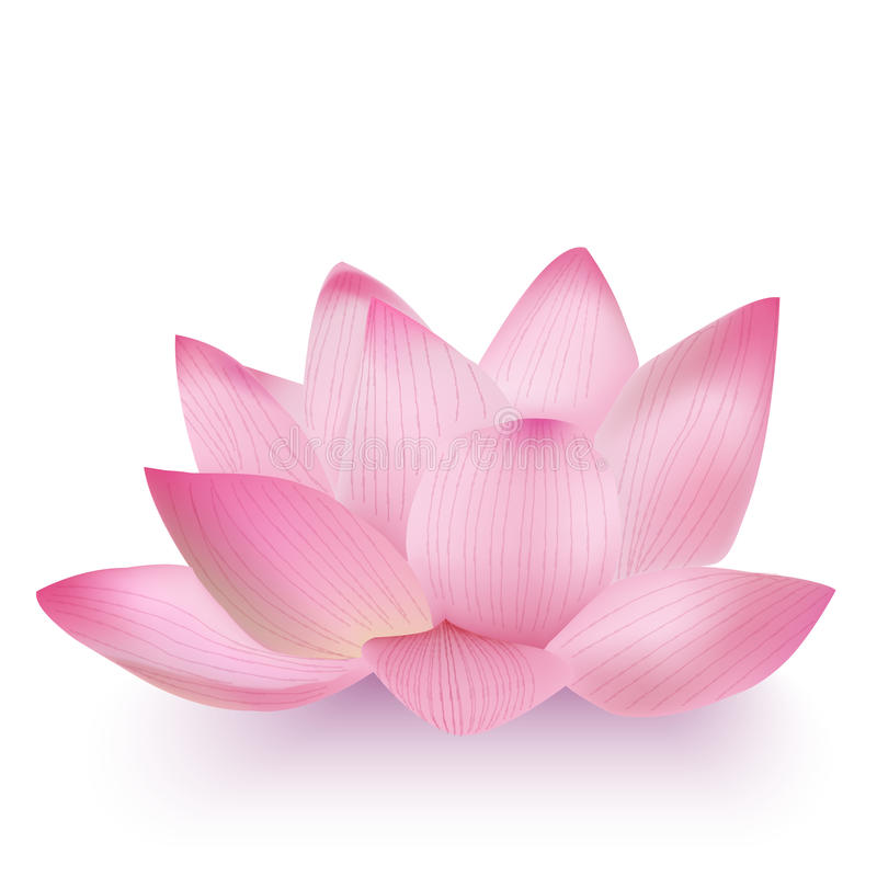 Photo-Realistic Lotus Flower. Vector Photo-Realistic Lotus Flower vector illustration