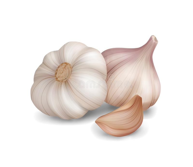 Photo realistic vector garlic on white background. Photo realistic garlic isolated on white background. Vector illustration. 3d game icon royalty free illustration