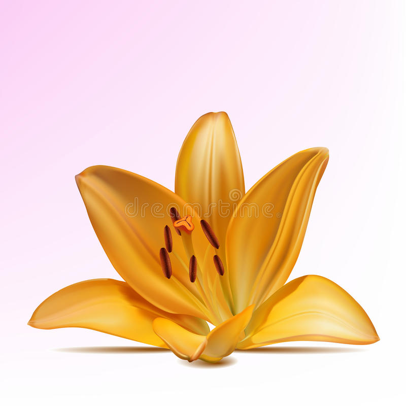 Photo-realistic yellow lily. Photo-realistic beautiful yellow lily vector illustration