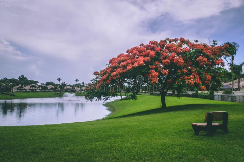 Photo of Red Flowering Trees Beside Body of Water stock photo