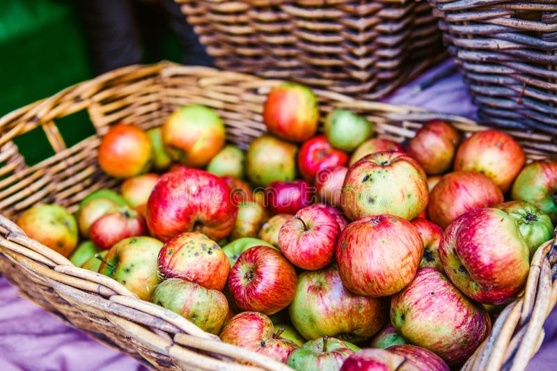 Photo of Red and Green Apples royalty free stock photography