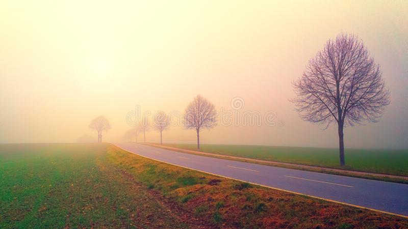 Photo of Road in the Middle of Foggy Field royalty free stock photos