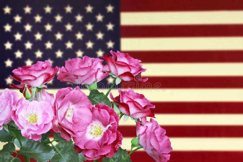 A photo of roses on the USA flag. American flag in vintage style and flowers for the Memorial Day or 4th of July. royalty free stock images