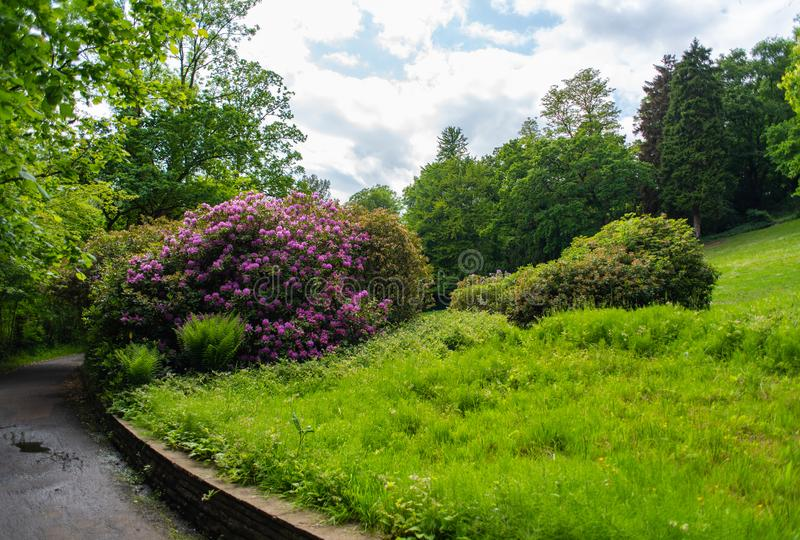A photo safari through the Knoops Park in Bremen on the river Lesum royalty free stock photo