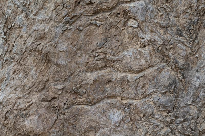 Photo sale de texture d'écorce d'arbre Fond en bois rustique d'écorce Arbre forestier tropical avec l'ornement naturel image libre de droits