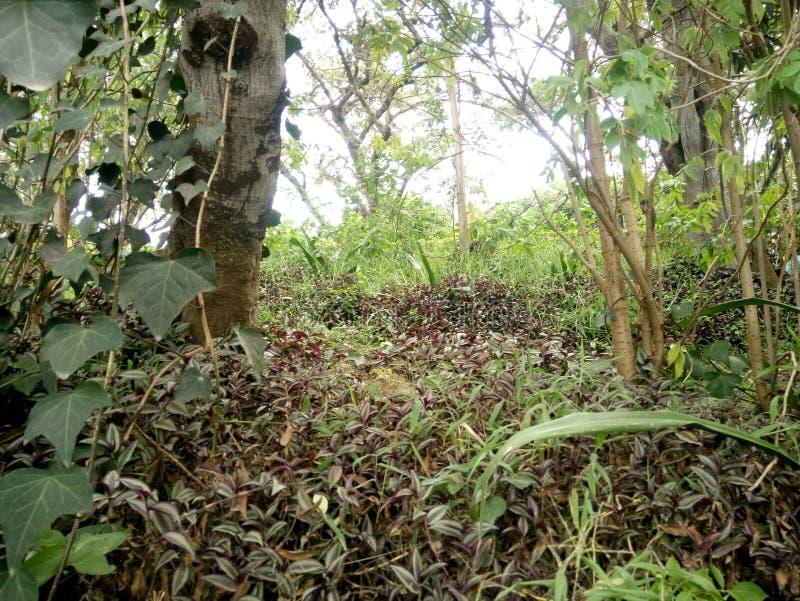 Vegetation royalty free stock photography