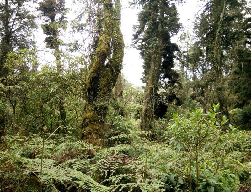 Vegetation stock image