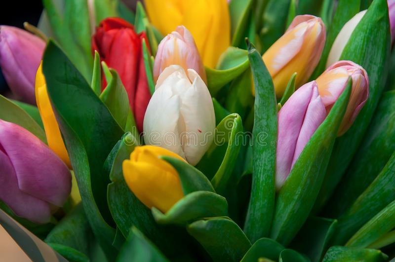 Bouquet tulips, tulip, tulips, flower, biossom, plants royalty free stock photo