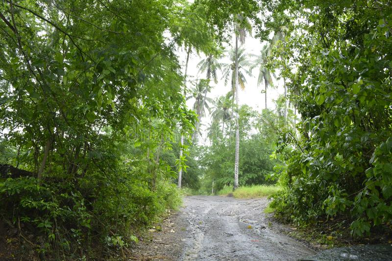 Feeder road leading to Miral river, Bansalan, Davao del Sur, Philippines. This photo shows the feeder road leading to Miral river, Bansalan, Davao del Sur royalty free stock photos