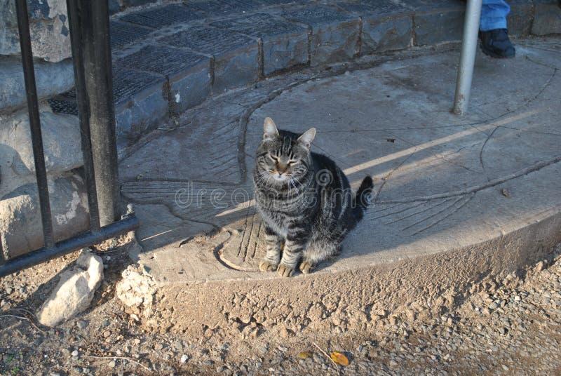 Yard cat on the viewing platform stock photos