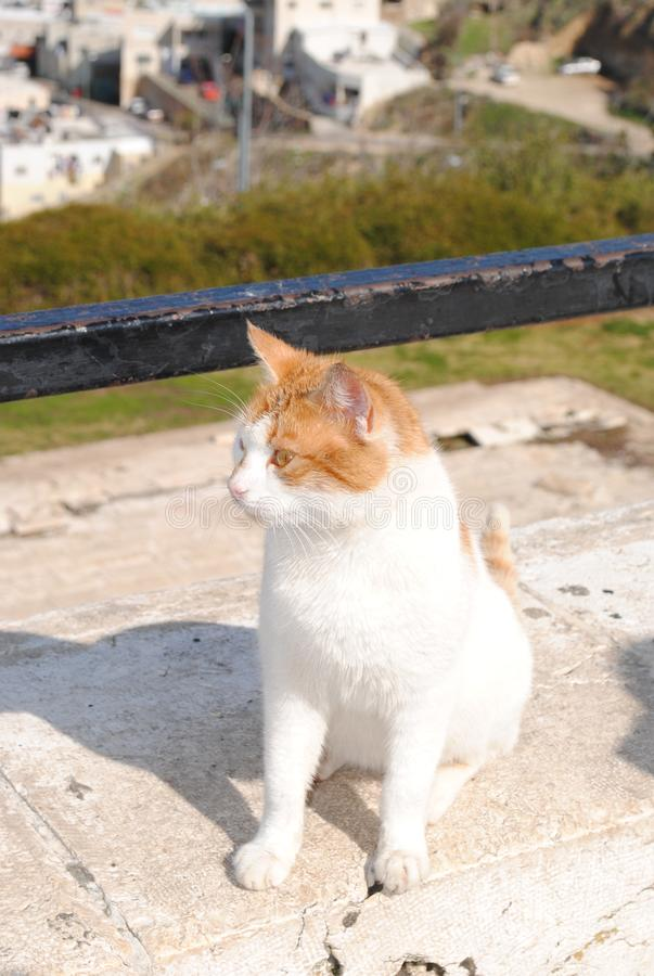 Yard cat on the viewing platform stock photography