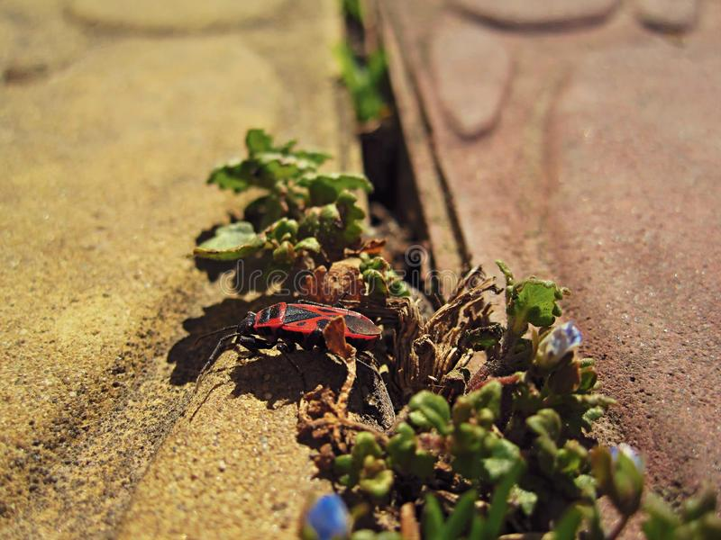 Red insect on tile. This photo shows a red insect on a tile royalty free stock photo