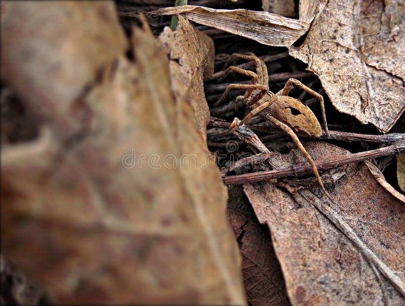 Spider in the leaves on the branches. This photo shows a spider in the leaves on the branches royalty free stock photo