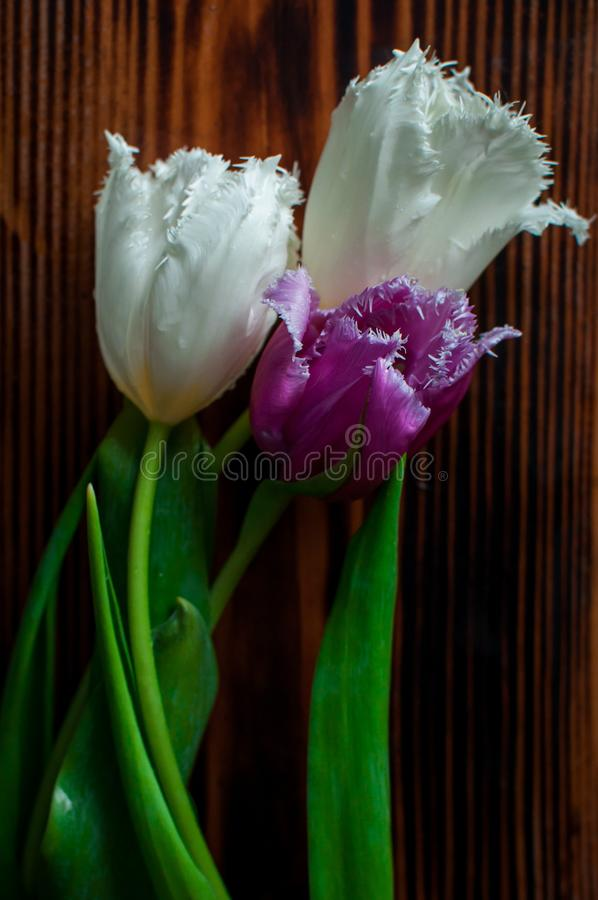 Three tulips on a wooden table royalty free stock image
