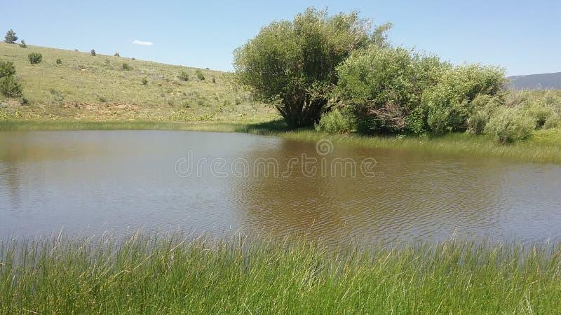 Photo simple d'étang photo stock