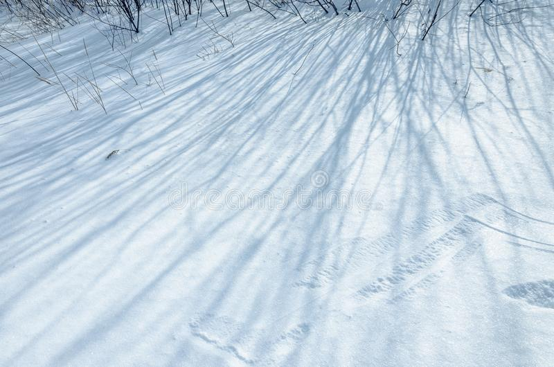 Photo of snow on which shadows from tree branches lie. Snow background with a picturesque snowdrift stock images