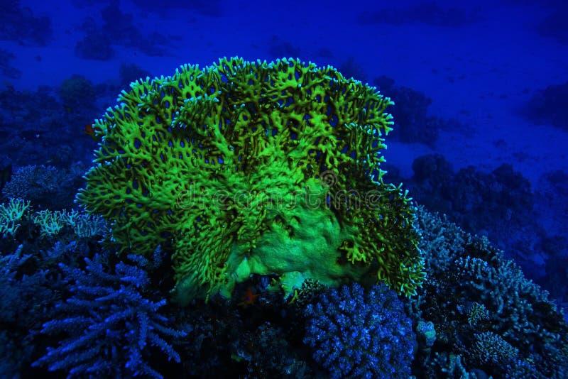 Photo sous-marine de récif coralien images stock