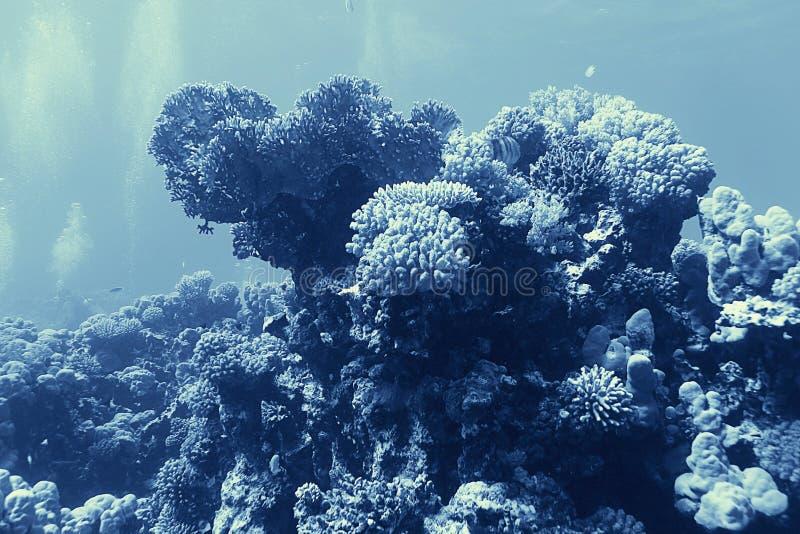 Photo sous-marine de récif coralien photographie stock