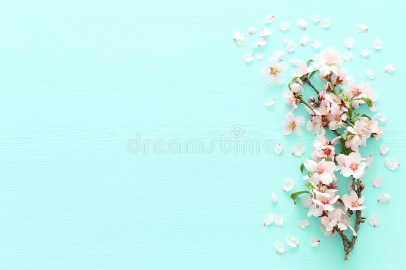 Photo of spring white cherry blossom tree on pastel mint wooden background. View from above, flat lay. Photo of spring white cherry blossom tree on pastel mint stock photo