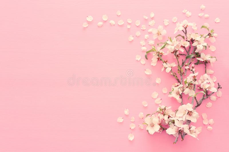 photo of spring white cherry blossom tree on pastel pink wooden background. View from above, flat lay. stock images