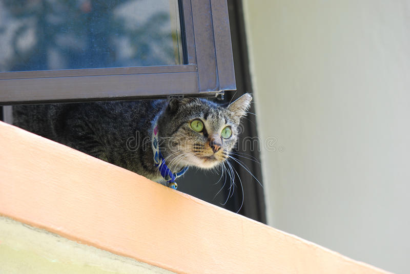 House Cat. A photo taken on a domestic cat at an apartment window ledge stock image
