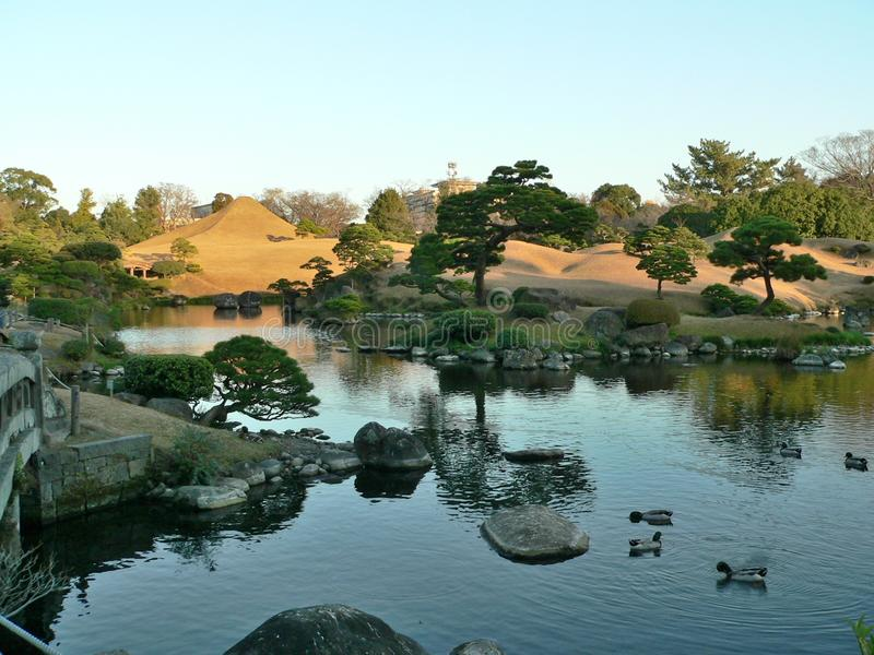 A Japanese style garden park with a shallow pond with some mandarin wood ducks on it stock photos