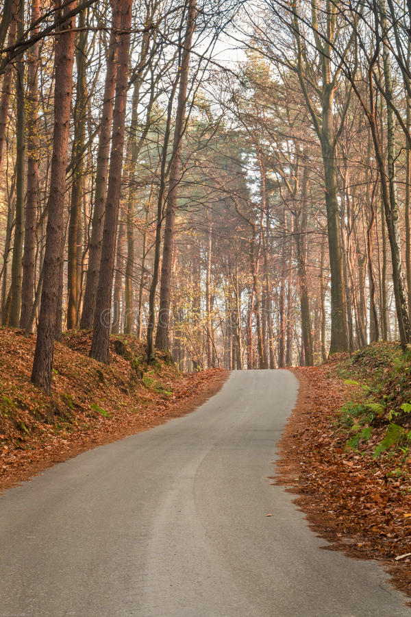 Forest road in the rays of rising sun. Photo taken at sunrise late autumn. Road lit by the rising sun in the midst of leafless trees stock image
