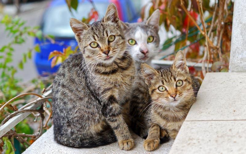 Photo of Three Cats royalty free stock image