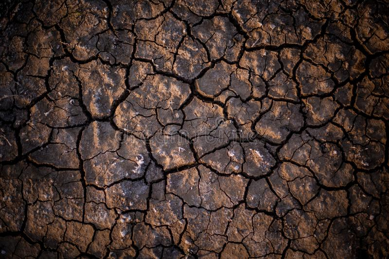 Photo took to the ground in a dry terrain. stock photos