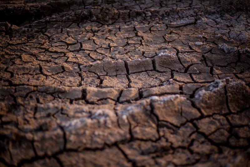 Photo took to the ground in a dry terrain. stock photo