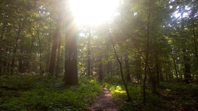 Photo of a trail in Delaware. Photo of a trail in Brandywine Creek State Park in Delaware stock photo