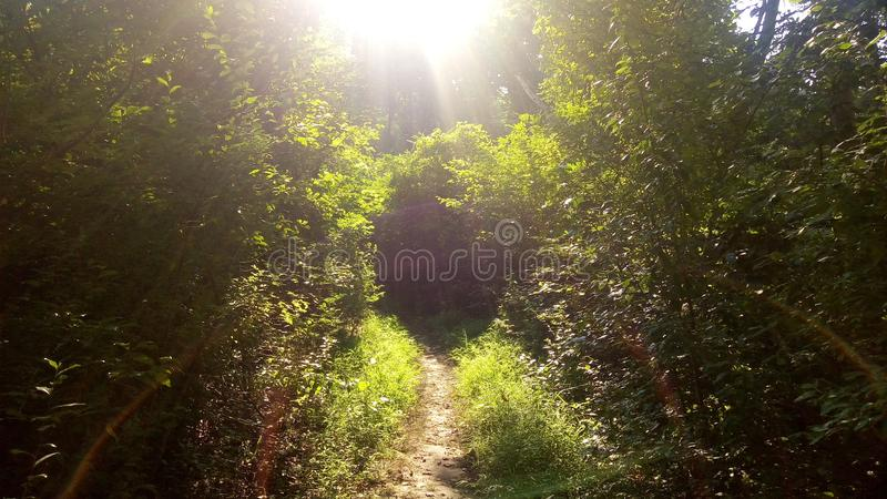 Photo of a trail in Delaware. Photo of a trail in Brandywine Creek State Park in Delaware stock photos