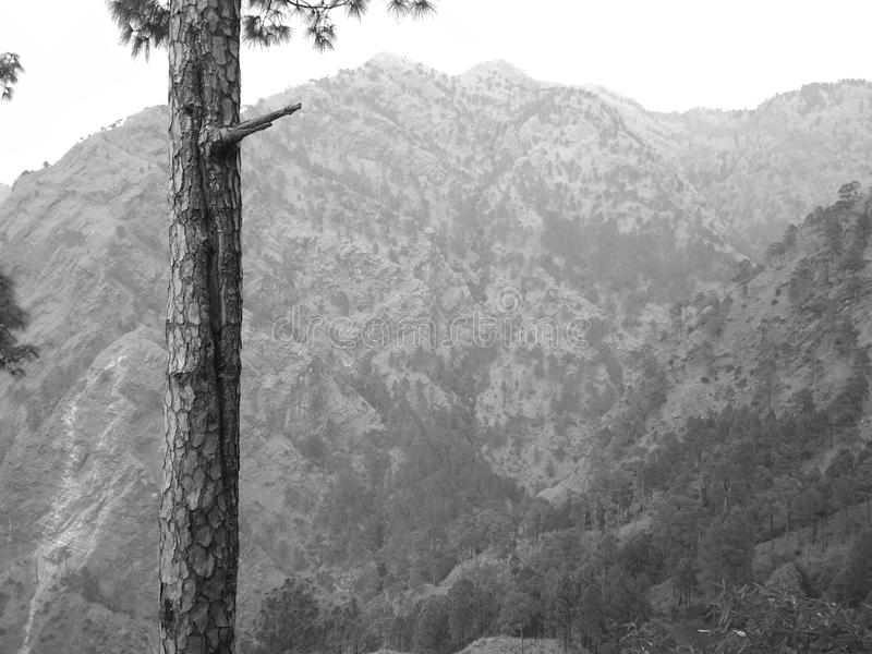 Combine photo of mountain and trees awesome photo clicked in jammu. Photo of tree Awesome photo of Jammu. Clicked by my mobile Redmi4 stock images