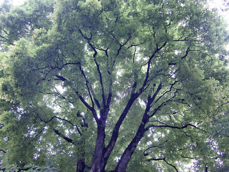 Green trees in St Petersburg stock photos