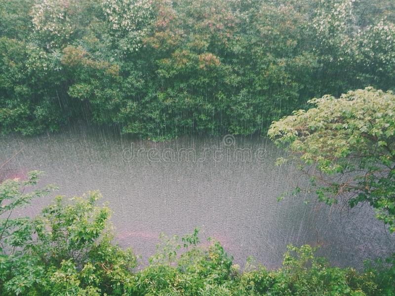 Photo Of Trees Being Poured By Rain Free Public Domain Cc0 Image
