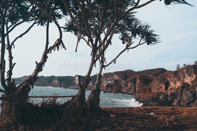 Photo of Trees Near the Sea stock photography