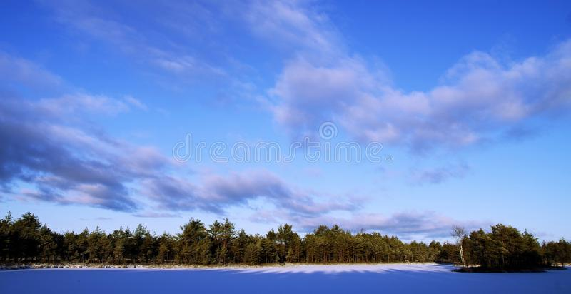 Photo of Trees During Winter stock photography