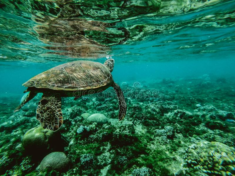 Photo Of A Turtle Underwater Free Public Domain Cc0 Image